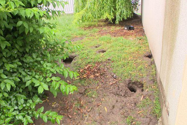 Les terriers des rats au pied des immeubles près des sources de nourriture.