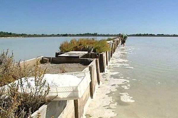 La Palme (Aude) - la récolte du sel reprend après 8 ans d'abandon de la production - 28 août 2014.