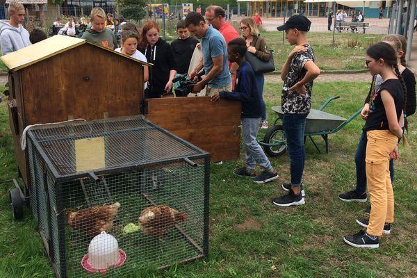 La cour de récréation du collège du Thillot dans les Vosges a été transformé en basse-cour, pour sensibiliser les élèves au réchauffement climatique.