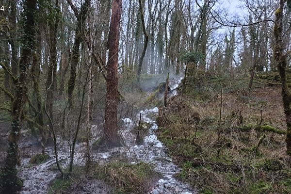 Pollution de la Mée, affluent de la Loue à la suite de problème de rejets de la fromagerie Perrin à Cléron. Photo : Fédération de pêche du Doubs.