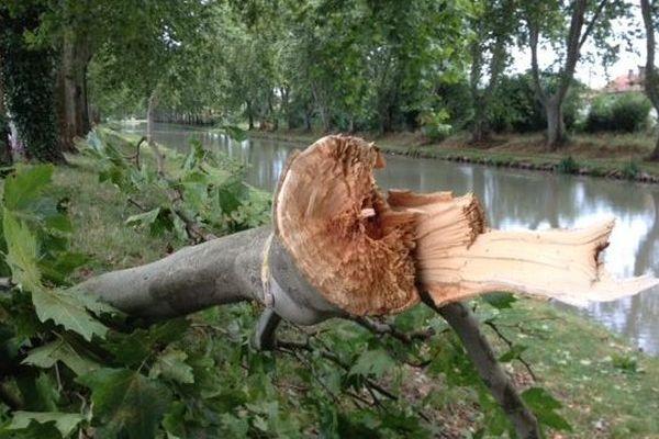 Un arbre sectionné par le vent au bord du canal. Le 6 juillet 2014