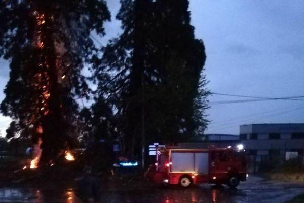 Les pompiers au pied du plus grand des deux séquoias frappé par la foudre