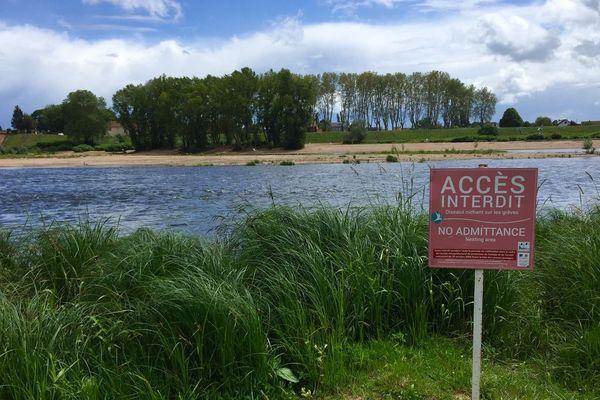 L'île aux sternes à Nevers fait l'objet d'un arrêté préfectoral pour protéger la nidification.