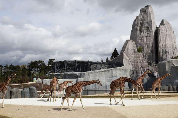 La recette des restaurants et guinguettes du parc zoologique de Vincennes a été braquée dimanche soir vers 20h par 4 hommes masqués.