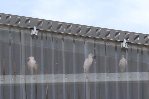 Des oiseaux sont piégés derrière les plastiques de cette usine de valorisation de déchets