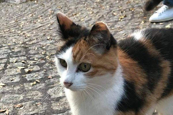 """Nice délivre un badge de """"nourrisseur"""" de chats de rue."""