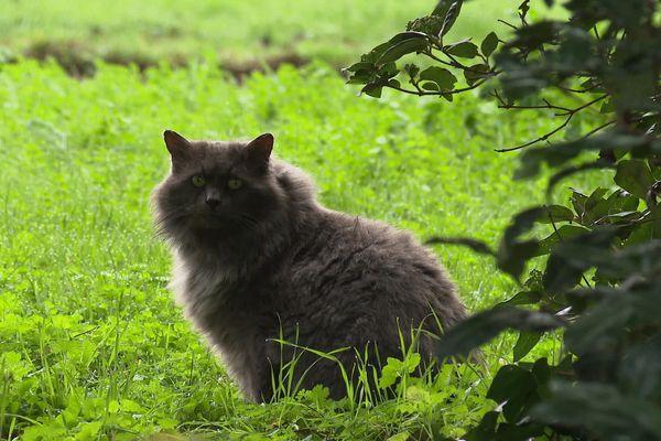 Trop de chats à Poitiers