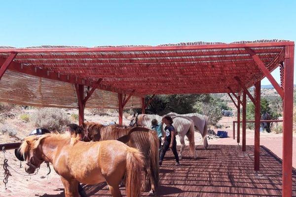 Les poneys dans un centre équestre du lac du Salagou dans l'Hérault.