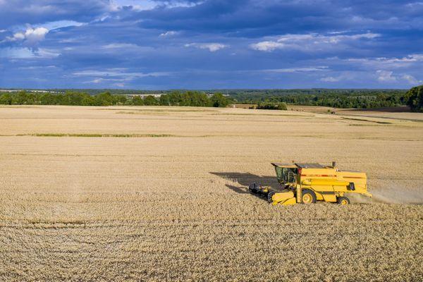 La moisson 2020 s'avère très mauvaise pour un grand nombre de producteurs céréaliers. Photo d'illustration