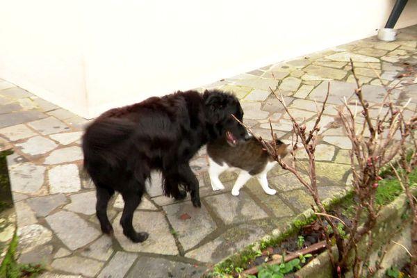 Homère et Bouboule, le chien et le chat d'Amandine