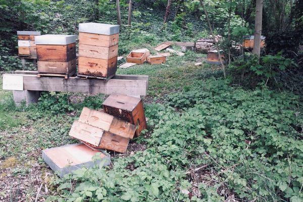 Plusieurs ruches appartenant aux membres de la société d'apiculture de Strasbourg ont été volontairement jetées au sol ce samedi 1er mai.