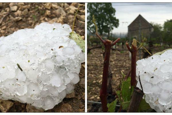 La grêle a durement frappé le domaine Gueguen situé sur le vignoble de Chablis et sur le vignoble de l'Auxerrois.