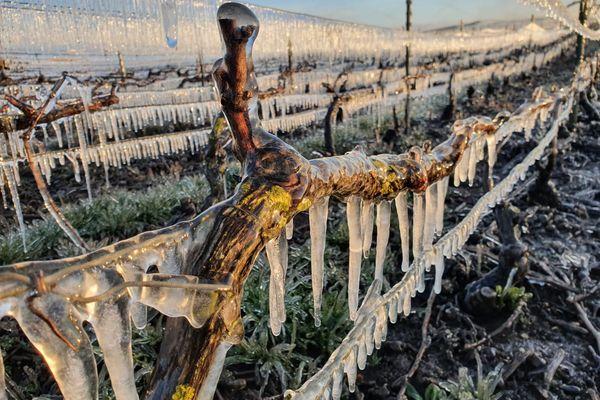 A Charly-sur-Marne, un collectif de vignerons utilise un dispositif d'aspersion d'eau pour former de la glace sur les vignes et les protéger du gel, mais ce type d'équipement reste peu répandu.