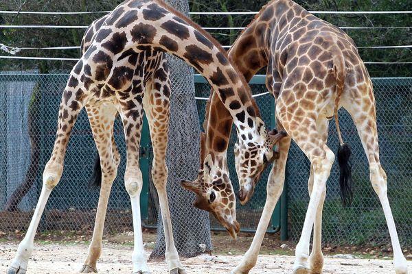 Les animaux du zoo du Lunaret à Montpellier vont retrouver le public - juin 2020