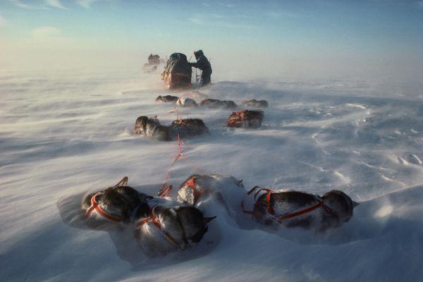 1990, la traversée de l'Antarctique en traineaux à chiens
