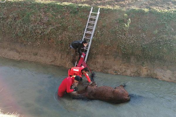 Le cheval est tombé dans un chenal à Montgaillard-Lauragais (Haute-Garonne).