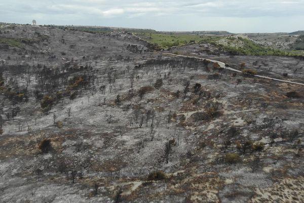 290 hectares brûlés malgré les 350 hommes mobilisés samedi dernier dans le massif de la Clape.