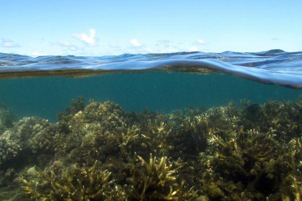 Les récifs coralliens pourraient disparaître de la surface du globe d'ici 2050 sous l'effet du réchauffement climatique.
