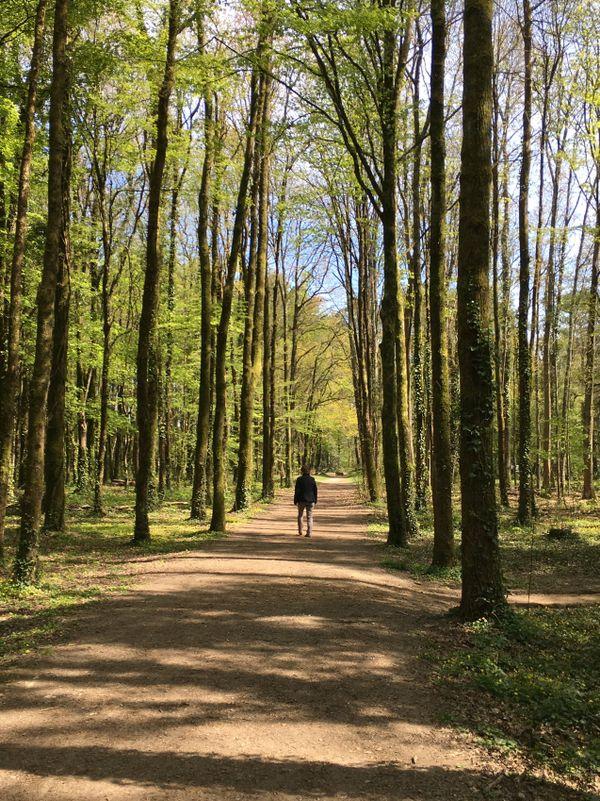 ballade au coeur du parc de la Gournerie à Saint-Herblain en pleine vallée de la Chézine