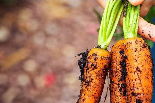 Les légumes abîmés sont proposés à moindre coût sur l'application Pepino.
