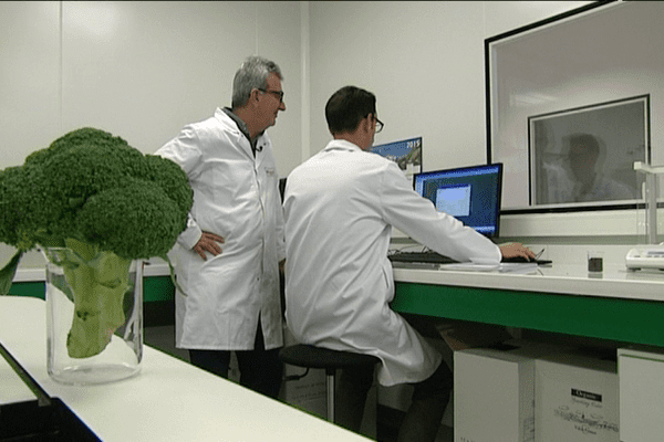 Du brocolis dans les laboratoires de Nutrinov
