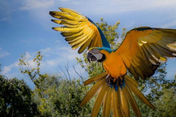 Parc des oiseaux de Villars-les-Dombes. Image d'illustration.