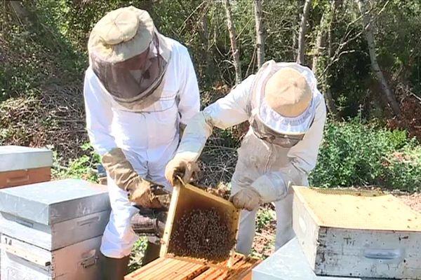 Cette année, la récolte de miel sera très inférieur à l'année dernière.