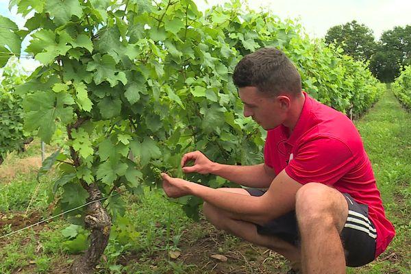 Vincent Eysseric, jeune vigneron, estime les pertes sur son exploitation entre 50 et 80% à cause du gel.