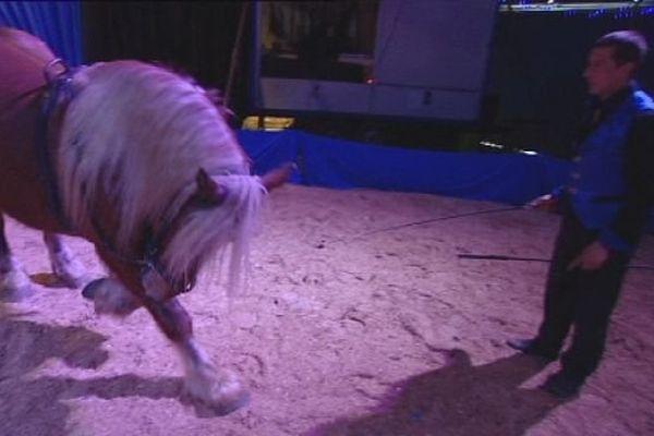 Le cirque Majaz'l et ses chevaux comtois