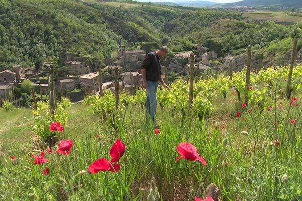 Dans le Pilat Rhodanien, sur les hauteurs de Malleval, les vignes de Thierry Farjon - mai 2021