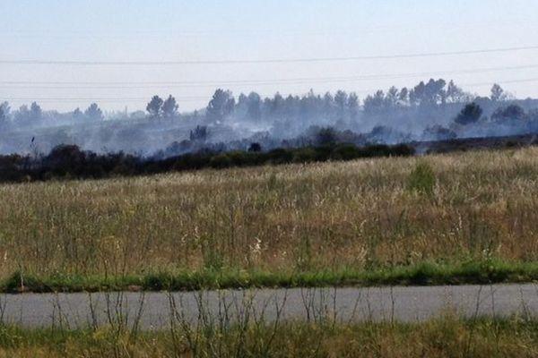 Laure-Minervois (Aude) - un incendie a détruit 25 hectares de pinède - 17 juillet 2014.