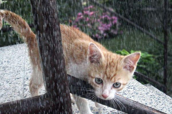 Pluie ou bruine, pas d'autre choix