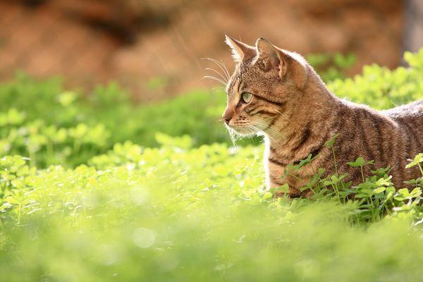 Un chat c'est un concentré de bonheur.