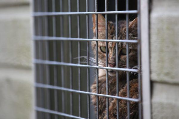 En France, chaque année près de 100 000 chiens et chats sont abandonnés avec un pic durant la période estivale.
