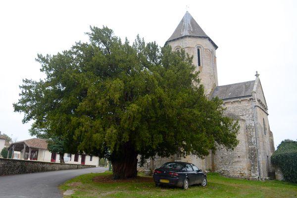 L'If de Châtain est considéré comme l'arbre le plus vieux de la Vienne. Il serait âgé de 900 ans.