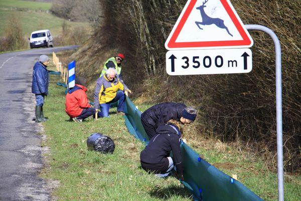 Une dizaine de filets au moins sont installés en Lorraine de mi-février à fin mars pour canaliser les batraciens, et leur permettre d'aller se reproduire.