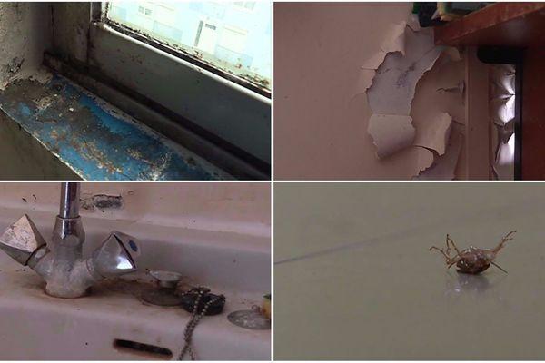 L'état de dégradation des chambres louées par le Crous est très important.