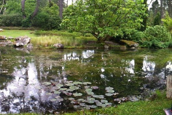 Vue sur le grand étang