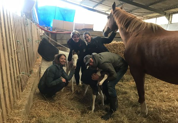 Après la naissance de Vici et Venicia, beaucoup de personnes ont proposé leur aide pour s'occuper des poulains