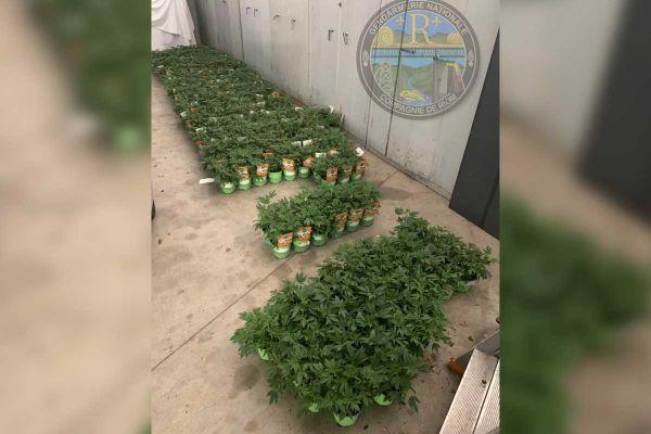 La saisie de 400 plants suspects a eu lieu dans 7 enseignes du Puy-de-Dôme, fin mai.