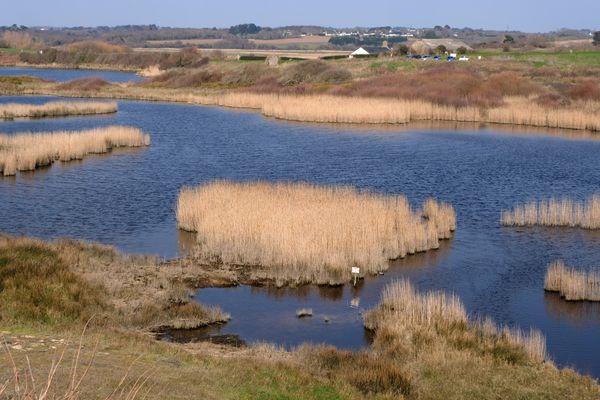 Refuge des oiseaux migrateurs, les étangs du  Loc'h sont classés zone naturelle régionale.