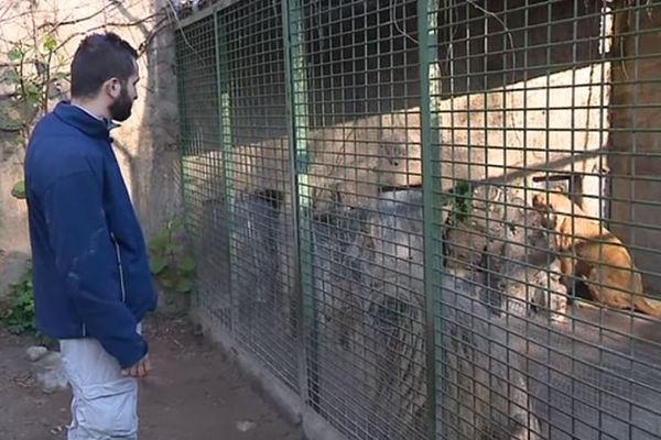 Julien, soigneur-animalier au zoo de Romanèche-Thorins.