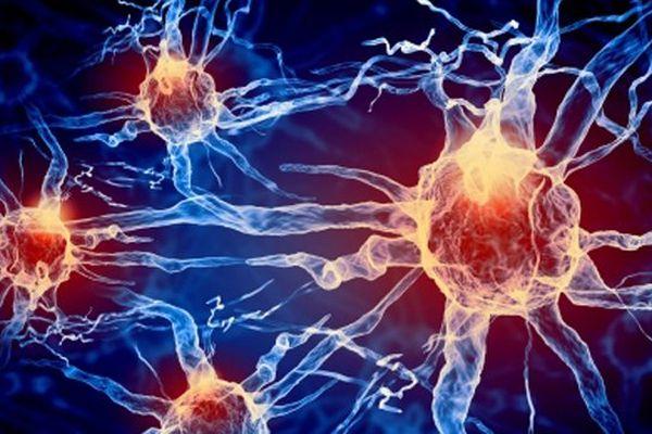 Un nouveau traitement en vue pour la maladie de Parkinson ?