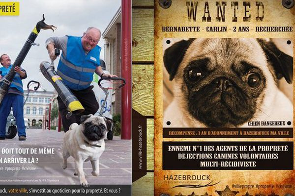 Une campagne de communication contre les déjections canines vient d'être lancée par la ville d'Hazebrouck