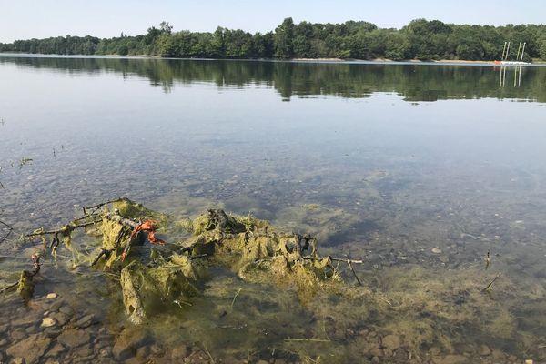 Les cyanobactéries sont présentes en forte proportion dans les eaux du Cébron