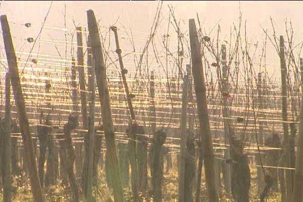 Le 1er Janvier 2016, les droits de plantation seront supprimés par Bruxelles.