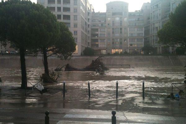 Gros arbre échoué devant l'hôtel de région à Montpellier après les violents orages de la nuit du 6 au 7 octobre 2014