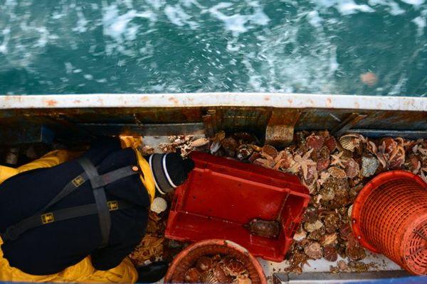 30% des poissons et coquillages pêchés par des navires français sont capturés dans les eaux du Royaume-Uni