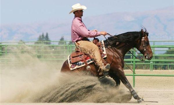 L'équitation western est une équitation qui s'est développée dans l'Ouest des États-Unis au XIXᵉ siècle.