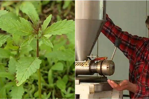 Arnaud Pilet produit du chanvre bio dans les Ardennes